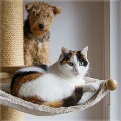 Nele & Motte (No_Water) Tags: cat hund calico katze nele nip addicts motte alittlebeauty