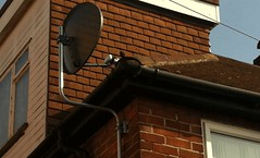NetBuyBay_Recent job - Kalaignar Tv  Intsalled In Harrow (netbuybay) Tags: vijay kent tv view satellite free system full end hatch tamil catford installed harrow supplied | in northwestlondon luwisham starvijaytvsuppliedinstalled|innortholt suntvfullsystemssuppliedinstalled|insidcupdartford