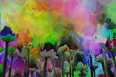 different tulips (LeChienNoir) Tags: sky holland netherlands canon arty tulip tulpen 500d couloured kleurige canonnl lechiennoir