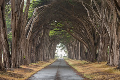 The Alley (andreaskoeberl) Tags: california trees shadow house mist building green lines rain fog vanishingpoint alley nikon marin bayarea pointreyes straight avenue 70200 d800 nationalseashore 70200f28 nikond800 nikon70200f28vrii