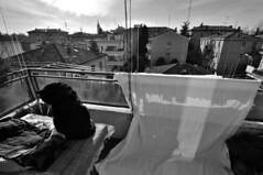 Balkon (gabymann) Tags: blackcat balkon tisch tavolo gatto balcone laken luzi gattonero lenzuolo schwarzerkater