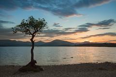 Millarochy_Bay_ (RHSands) Tags: sunset summer water bay scotland loch lomond treet millarochy