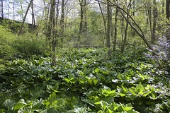 "1.1 Acre Wetlands • <a style=""font-size:0.8em;"" href=""http://www.flickr.com/photos/92887964@N02/9269358113/"" target=""_blank"">View on Flickr</a>"