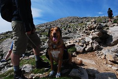 On the trail to Mt. Audubon (Let Ideas Compete) Tags: above dog mountain mountains rockies high colorado mt hiking altitude indian hike alpine hiker rockymountains wilderness peaks tundra highaltitude audubon timberline therockies abovetimberline