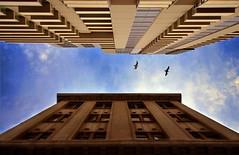 Shooting Up . . . (again) (phunnyfotos) Tags: sky birds architecture nikon australia melbourne victoria lookingup vic hdr d5100 nikond5100 phunnyfotos