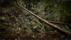 Fallen... (Keith Chastain) Tags: santacruz nikon hdr d800 photomatix hdrphotography keithchastain copyright20042013