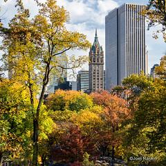 Central Park - Fall 2013 (Joel Raskin) Tags: nyc newyorkcity autumn trees fall colors square centralpark manhattan sony parks 11 alpha urbanlandscape urbanpark urbantrees mirrorless emount nex6 tamron18200diiiivc sonynex6