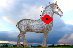Lest We Forget (Fraser Murdoch) Tags: park uk winter sunset red horse cold andy statue metal canon scott photography eos scotland big wire motorway dusk glasgow steel united 9 kingdom junction business poppy m8 1997 british fraser approach heavy eastern murdoch legion clydesdale a8 galvanised appeal the easterhouse baillieston 650d bailieston