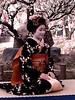 Maiko (Geisha Apprentice) at Kitano Temangu Shrine in Kyoto (Ronin Dave) Tags: beauty festival japan kyoto maiko geiko geisha plumblossomfestival