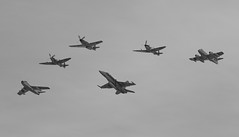 IMG_8914.jpg (Shark Wrangler) Tags: jets airshow sabre spitfire hornet mustang warbirds raaf kittyhawk meteor temora