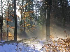 DSCN8223 ein Wintertraum am Morgen - A winter dream in the morning (baerli08ww) Tags: schnee winter sun mist snow colors fog forest germany deutschland day nebel tag ngc npc sonne wald farben rheinlandpfalz westerwald rhinelandpalatinate supershot nikoncoolpixe5600 mygearandme mygearandmepremium mygearandmebronze mygearandmesilver mygearandmegold mygearandmeplatinum mygearandmediamond blinkagain photographyforrecreationeliteclub celebritiesofphotographyforrecreation photographyforrecreationclassic