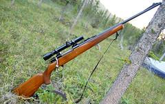In the Field (lledwod) Tags: sheep rifle hunting rings weaver 4100 k3 husqvarna conetrol