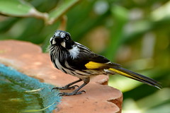 2014-01-16_12-10-40 (J Rutkiewicz) Tags: birds ptaki