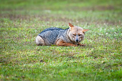 (kenbruger) Tags: chile patagonia nikon fox torresdelpaine d700 wcircuit