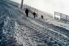 Subiendo por la cuesta nevada  ( La Bola , sierra de Madrid )_DSC6727 r esf c ma (tomas meson) Tags: madrid snow de spain nikon nieve paisaje sierra bici invierno montaa hielo navacerrada labola puertodenavacerrada tomasmeson