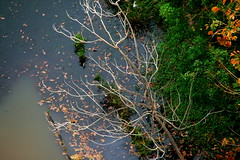 Home-made Autumn (MahanMD) Tags: autumn trees orange lake tree green water leaves yellow branch malaysia kualalumpur سبز زرد آب آبی مالزی canon400d برگ نارنجی دلتنگی آبگیر