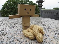 Wow! - Danboard and Peanut - Narita-san, Neyagawa, Osaka (Ogiyoshisan) Tags: food japan japanese eat peanut 成田山 naritasan yotsuba danbo 落花生 revoltech よつば danboard ダンボー