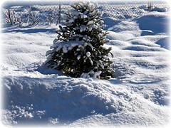 Snow piles (MissyPenny) Tags: winter white snow tree pennsylvania buckscounty bristolpennsylvania pdlaich missypenny
