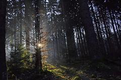 _DSC7853 Sonnenaufgang im Märchenwald - Sunrise in the fairy forest (baerli08ww) Tags: winter light sun mist colors fog forest germany landscape deutschland licht nikon nebel natur landschaft sonne wald farben rheinlandpfalz westerwald rhinelandpalatinate sunrays5