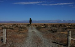 No Neighbours (Tones Corner) Tags: blue tree landscape vista mackenziecountry southcanterbury nzscene