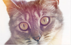 Sweet memories of Micky (Simply Viola (+Off - On )) Tags: cats gatos felini felines katzen gatti mygearandme mygearandmepremium mygearandmebronze mygearandmesilver