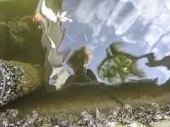 Florida selfie (grace*c*) Tags: reflection water self march canal pillar palmtree barnacles caustics boatdock florida2014