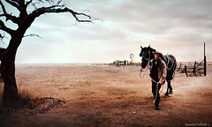 Dust Farm (Annette LeDuff) Tags: horse man tree farm 1925 thegreatgatsby favorited fscottfitzgerald digitallyaltered bazluhrmann 2013 photoannetteleduff annetteleduff leduffcameraart infinitexposure 03152014