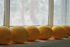 home produce (jypsygen) Tags: color macro tree window yellow fruit lemon dof bright skin smooth depthoffield shelf citrus homegrown limon zest harvested