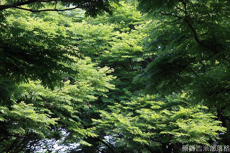 Park_049