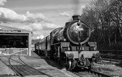 """Ingrow Bongo"" Thompson B1 61264 (Liam60009) Tags: kwvr keighleyandworthvalleyrailway 61264 b1 bongo thompson blackandwhite monochrome steamlocomotive steam steamtrain steamgala"