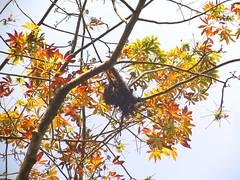 পাখির বাসা (Bird's Nest) (ferdoush007) Tags: bangladeshi natural beauty bd beautiful scene wow nice bangla বাংলাদেশ বাংলাদেশের প্রাকৃতিক সৌন্দর্য বাংলার রূপ গ্রাম গ্রাম্য countryside country side village nest bird birds tree bangladesh পাখির বাসা