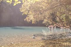Another day in paradise (Josué Godoy) Tags: paradise paraíso paradis australia arbol tree arbre lake lago lac agua eau water