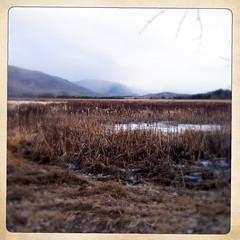 Bristol Pond (* a m e l i a *) Tags: bristol vermont vt nature landscape winter dry cold