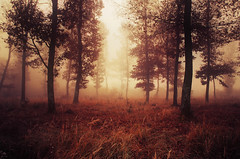 If These Trees Could Talk LIV. (Zsolt Zsigmond) Tags: forest trees woods autumn fall fog mist light nature landscape