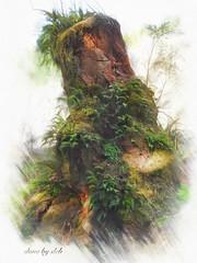 Stump Forest (done by deb) Tags: digitalpainting photopainting jixipix impressopro