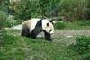 動物園_368 (Taiwan's Riccardo) Tags: 2014 taiwan digital color dslr nikond600 nikonlens afs nikkor zoom 18200mmf3556 vr 台北市 木柵 動物園 熊貓 panda 團團