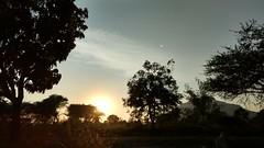 #india#Capture#Motog4plus#nature#Evening#sunset#Trees#village#sky#moon#sun#together#Satara (omkar.thebabar) Tags: moon capture together trees motog4plus sky village satara nature india evening sun sunset