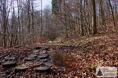 Baumscheiben als Brücke auf dem Trauntal-Höhenweg