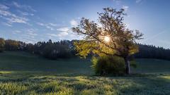 Sun and a tree (Sebo23) Tags: baum tree sunrise sun sunbeams sunstar sonnenaufgang sonne sonnenstrahlen sonnenstern gegenlicht landscape landschaft frühling spring canon6d canon24704l
