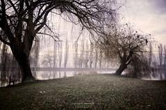 s  t  a  g  i  o  n  i (swaily ◘ Claudio Parente) Tags: fog nebbia lago lake abruzzo marsica nikon d300 swaily claudioparente