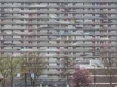 Bird spotting (sander_sloots) Tags: galerijflat vlaardingen birds flat flatgebouw apartment block housing abel tasmanlaan vogels art