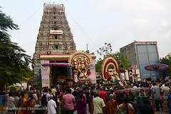 Marundheeswarar Temple - AdhikaraNandhi  _ Panguni Utsavam 2017 (Kapaliadiyar) Tags: kapaliadiyar marundheeswarar temple adhikaranandhi thiruvanmiyur