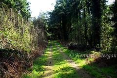 Tintern Trails (Ken Meegan) Tags: tinterntrails tinternwoods saltmills cowexford ireland walkingtrail wood trees 2632017