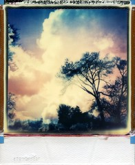 (er_code_blue) Tags: polaroid 600 impossibleproject instant analog integral film polaroidweek