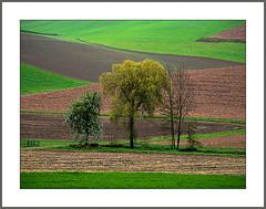 Felder im Frühling (Fields in spring) (alfred.hausberger) Tags: felder feldstrukturen frühling bäume amsham