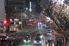 IMG_0520 (digitalbear) Tags: canon powershot g9x markii mark2 nakano dori sakura cherry blossom blooming fullbloom tokyo japan yozakura hanami