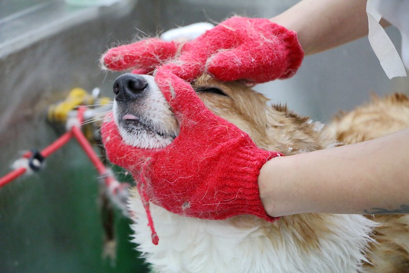 洗澡吧寵物澡堂52