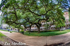 20170423_13575601_HDR.jpg (Les_Stockton) Tags: frenchquarter hdrefex highdynamicrange neworleans hdr tree vacation louisiana unitedstates us
