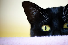 Pardon me... Do you have a tasty-treat for me?? (Captions by Nica... (Fieger Photography)) Tags: toby eyes pet portrait cat catmoments catportrait catseyes feline indoor bright quebec canada animal