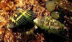 LIFE in a ROCK POOL (Lani Elliott) Tags: nature naturephotography water rockpool rockpools shells snails seaweed marine light bright